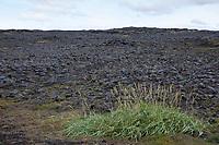 Steinwüste, Felsen, Flechten und Moose, Vulkanlandschaft, Lavafeld, Lavafelder, Halbinsel Reykjanes, Reykjanes-Halbinsel, Reykjanesskagi, Island, Iceland