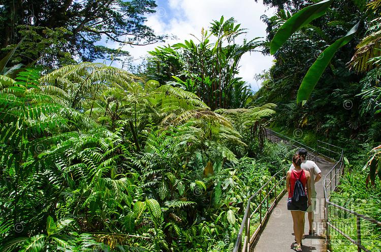 A couple on the trail in 'Akaka Falls State Park near large hapu'u ferns, Big Island of Hawai'i