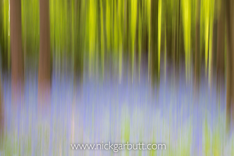 Motion blur abstact in Bluebell (Hyacinthoides hispanica) deciduous woodland, Dorset, England.