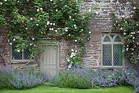 An old fashioned rose, one of many breeds in the gardens, with flowering lavendar below. The gardens have progressed into a wonderful feature at Kentchurch Court since John Scudamore inherited the house in 1815