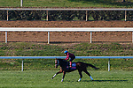 November 3, 2020: Aunt Pearl, trained by trainer Brad Cox, exercises in preparation for the Breeders' Cup Juvenile Fillies Turf at Keeneland Racetrack in Lexington, Kentucky on November 3, 2020. John Voorhees/Eclipse Sportswire/Breeders Cup/CSM