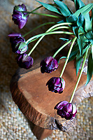 A vase of purple tulips on the rustic coffee table in the living room