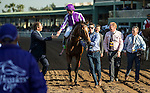ARCADIA, CA - NOVEMBER 05: Seamus Heffernan, aboard Highland Reel #12, after winning Longines Breeders' Cup Turf during day two of the 2016 Breeders' Cup World Championships at Santa Anita Park on November 5, 2016 in Arcadia, California. (Photo by Alex Evers/Eclipse Sportswire/Breeders Cup)