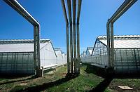 HUNGARY Szentes, use of geothermal water to heat greenhouse of ARPAD Agro cooperative for production of vegetable for export / UNGARN Szentes, Nutzung von Geothermie Thermalwasser zum Beheizen der Gewaechshaeuser bei Arpad Agrar Genossenschaft, Anbau von Gemuese wie Tomaten und Paprika fuer Export
