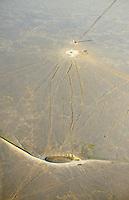 Southeastern Colorado ranchland watering hole.  Near Eads, Colorado.  April 2013  84849