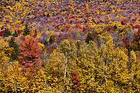 Autumn forest detail, Stowe, Vermont, USA.