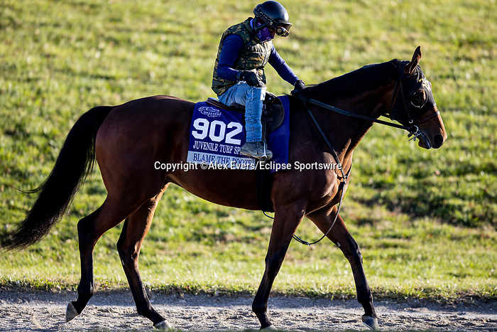 November 3, 2020: Blame The Booze, trained by trainer Wesley A. Ward, exercises in preparation for the Breeders' Cup Juvenile Turf Sprint at Keeneland Racetrack in Lexington, Kentucky on November 3, 2020. Alex Evers/Eclipse Sportswire/Breeders Cup