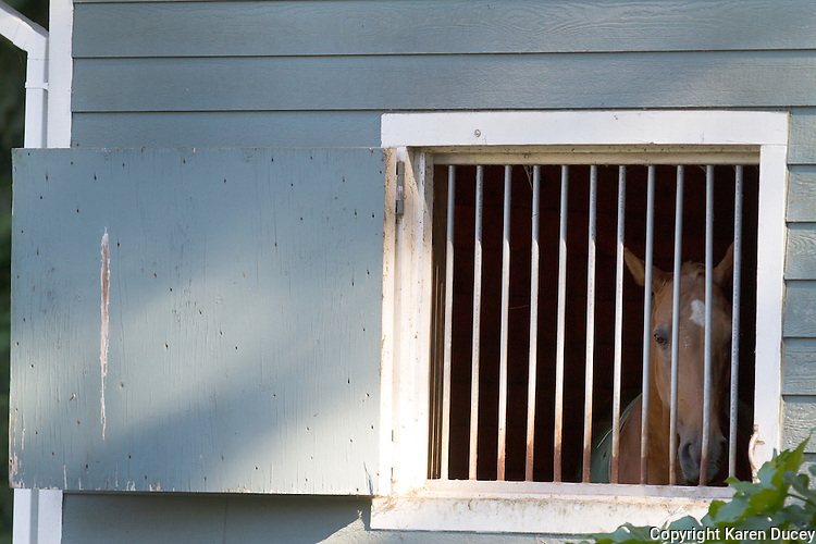See My Magic, a Tennessee Walking Horse, has been locked up for years in his stall in Roy, Wash. (© Karen Ducey Photography)