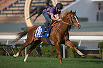 SHA TIN,HONG KONG-DECEMBER 09: Neorealism,trained by Noriyuki Hori,exercises in preparation for the Hong Kong Mile at Sha Tin Racecourse on December 9,2016 in Sha Tin,New Territories,Hong Kong (Photo by Kaz Ishida/Eclipse Sportswire/Getty Images)