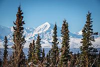 The Alaska Range seen from the Richardson Highway north of Summit Lake.