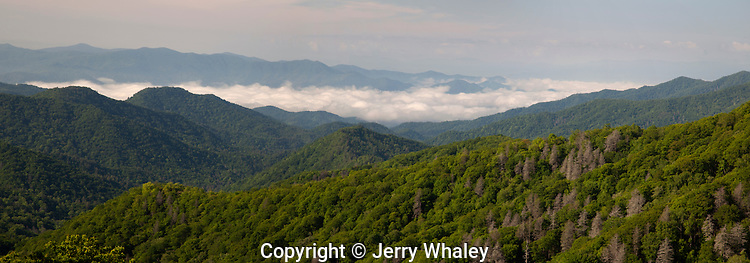 Spring, Great Smoky Mountains National Park