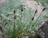 Mountain seed heads