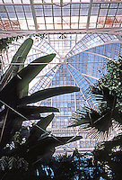 San Francisco: Conservatory--Interior.  Photo '83.