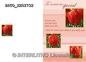 Alfredo, FLOWERS, BLUMEN, FLORES,  photos+++++,BRTOXX02732,#F#