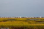 Tidal marsh on the Intracoastal Waterway, Murrels Inlet, SC