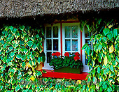 Tom Mackie, LANDSCAPES, LANDSCHAFTEN, PAISAJES, FOTO, photos,+6x7, building, buildings, chocolate box, cottage, cottages, dwelling, Eire, Europe, flower, flowers, geranium, home, horizont+al, horizontally, horizontals, house, houses, Ireland, Irish, ivy, medium format, residence, thatch, thatched roof, tradition+al, window, window box, windowbox, windows,6x7, building, buildings, chocolate box, cottage, cottages, dwelling, Eire, Europe+, flower, flowers, geranium, home, horizontal, horizontally, horizontals, house, houses, Ireland, Irish, ivy, medium format,+,GBTM030243-3,#L#, EVERYDAY ,Ireland