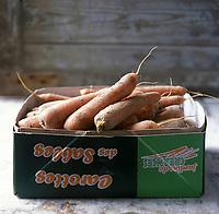Europe/France/Normandie/Basse-Normandie/50/Manche:/Créances: Carottes des Sables de Créances AOC Carottes des  sables - Stylisme : Valérie LHOMME //  France, Manche, Creances carrots grown in sandy soil, AOC Carottes des Sables (food stylist Valerie LHOMME)