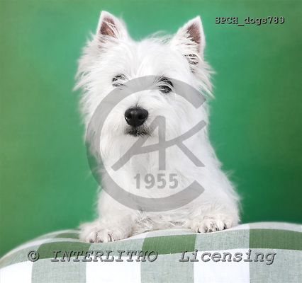 Xavier, ANIMALS, dogs, photos, SPCHdogs789,#A# Hunde, perros