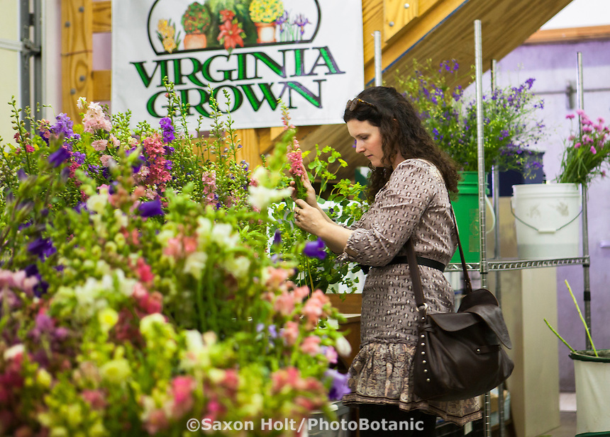 Young woman selecting cut local flowers at flower farmer Lisa Ziegler The Gardeners Workshop; Newport News, Virginia