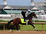 LOUISVILLE, KY - MAY 04: My Man Sam (Unusual Heat x Chelsea Fields, by Bataan) ridden by Daniel Bernardini, gallops at Churchill Downs, Louisville KY. He is pointed toward the Kentucky Derby. Owner Stein Stables, Inc. trainer Chad C. Brown. (Photo by Mary M. Meek/Eclipse Sportswire/Getty Images)