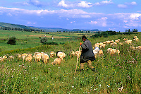 Croatia beautiful coast older sheep herder near Dubrovnik Croatia