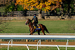 November 4, 2020: Authentic, trained by trainer Bob Baffert, exercises in preparation for the Breeders' Cup Classic at Keeneland Racetrack in Lexington, Kentucky on November 4, 2020. Scott Serio/Eclipse Sportswire/Breeders Cup