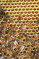Some bees on a honey comb.