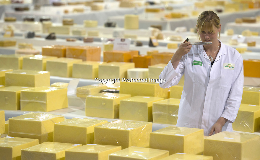 26/06/16<br /> <br /> Sarah Hinchliffe, dairy technologist, samples one of the cheeses.<br /> <br /> 2016 UK overall champion - Arla Foods - Taw Valley Creamery. Full list of results: http://www.internationalcheeseawards.co.uk/files/Trophy-Winners-2016.pdf<br /> <br /> It takes more than 250 judges to work their way through the 5,000 plus cheeses being shown at the annual International Cheese Awards, being held in Nantwich. <br /> <br /> Judges look for winning combinations of flavour, aroma, texture and appearance before announcing the overall show winner. <br /> <br /> The show is the world's biggest cheese competition and attracts entries from as far afield as New Zealand and Australia with around half the cheese coming from the UK.<br /> <br /> All Rights Reserved, F Stop Press Ltd. +44 (0)1773 550665