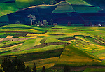 The irregular geometric shapes of the various greens and beiges as well as the bands of light and shadow create an interesting tapestry in the agricultural landscape, Andes Mountains, Ecuador.