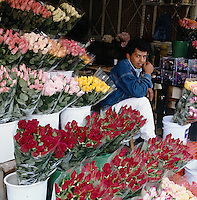 Flower vendors of Mexico City, series - young man selling roses. Mexico City Distrito Federal, Mexico.