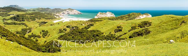 Coastal farmland and sheep with Wharariki Beach in background near Collingwood, Nelson Region, South Island, New Zealand
