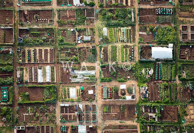 Community garden, Boulder, Colorado. May 2014. 84150