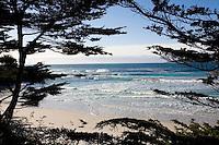 Monterey Cypress (Cupressus macrocarpa) at Carmel Beach Monterey County California. Pacific Ocean