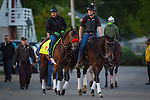 LOUISVILLE, KY - MAY 04: Nyquist gallops in preparation for the Kentucky Derby at Churchill Downs on May 04, 2016 in Louisville, Kentucky. (Photo by Zoe Metz/Eclipse Sportswire/Getty Images)