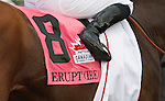 TORONTO, ON - OCTOBER 16: Erupt (IRE) #8, ridden by Stephane Pasquier, wins the Pattison Canadian International at Woodbine Racetrack on October 16, 2016 in Toronto, ON. (Photo by Sophie Shore/Eclipse Sportswire/Getty Images)