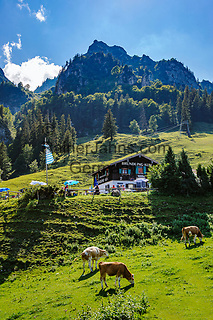 Deutschland, Bayern, Chiemgau, oberhalb Bergen: auf der Bruendlingalm, im Hintergrund der Hochfelln | Germany, Bavaria, Chiemgau, above Bergen: alpine pasture inn Bruendling Alm and summit Hochfelln