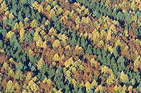 Herbstwald:DEUTSCHLAND, SCHLESWIG- HOLSTEIN 30.10.2005:Sachsenwald,  Nadelbaeume, Herbst, Laubfaerbung