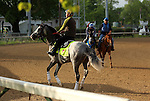 LOUISVILLE, KY - APRIL 28: Cherry Wine (grey horse in front, ridden by Faustino Aguilar) jogs wrong way on the track while Creator (grey horse in background, ridden by Abel Flores) is ponied to the starting gate for schooling by trainer Steven M. Asmussen at Churchill Downs, Louisville, KY, in preparation for the Kentucky Derby. (Photo by Mary M. Meek/Eclipse Sportswire/Getty Images)