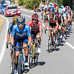 Miguel Angel Lopez Moreno (COL) Movistar Team, race leader Red Jersey Primoz Roglic (SLO) Jumbo-Visma, Olympic Champion Richard Carapaz (ECU) Ineos Grenadiers and Matteo Trentin (ITA) UAE Team Emirates during Stage 7 of La Vuelta d'Espana 2021, running 152km from Gandia to Balcon de Alicante, Spain. 20th August 2021.     <br /> Picture: Cxcling | Cyclefile<br /> <br /> All photos usage must carry mandatory copyright credit (© Cyclefile | Cxcling)