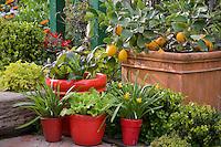 Rosalind Creasy Garden