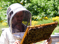 Apiary inspection - Beekeeping operation: Portrait of Julien Picard, young organic beekeeper in Saint-Vincent-de-Durfort in Ardèche.<br /> Portrait de Julien Picard, jeune  apiculteur bio en Ardèche à Saint-Vincent-de-Durfort.