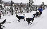 Thursday March, 2012   Martin Buser driving his team while brushing his teeth on the trail between Ophir and Cripple.   Iditarod 2012.