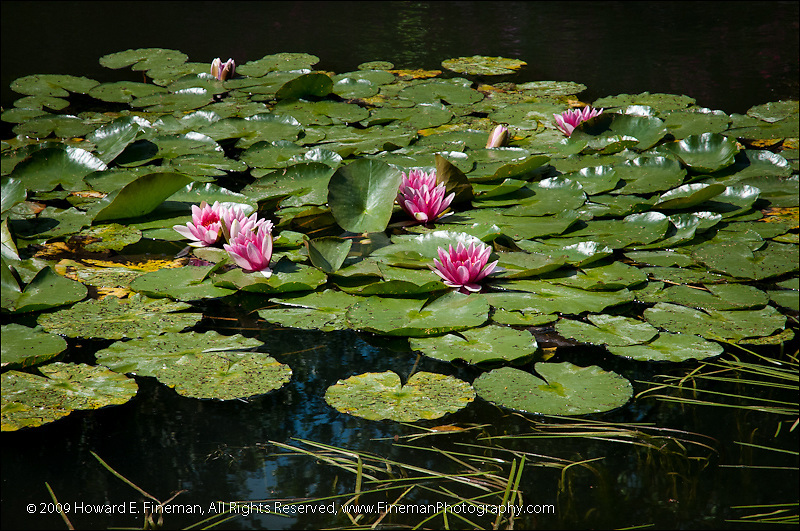 Monet's Lily Pond, Giverny (2)
