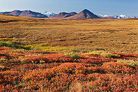 Autumn colored tundra in the Brooks Range mountains, Arctic, Alaska.