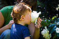 Young boy with his nose buried in a rose, smelling the scent.