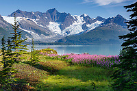 Summer landscape of Fireweed, trees and hanging glaciers in Harriman Fjord of Prince William Sound. Southcentral, Alaska<br /> <br /> Photo by Jeff Schultz/  (C) 2019  ALL RIGHTS RESERVED<br /> <br /> 2019 Into the Wild Alaska Photo Tour via Amazing Views