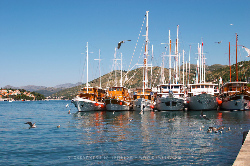 A row of beautiful wooden cruising, sailing and fishing boats ships yachts painted white moored along they key in the harbour. Luka Gruz harbour. Dubrovnik, new city. Dalmatian Coast, Croatia, Europe.