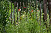 Unser Naturgarten in Hammer, Garten, insektenfreundlicher Garten, vogelfreundlicher Garten, blütenreich, Wildblumen, Wildblumengarten, Färberkamille, Gartenzaun, Zaun, Staketenzaun, Stakettenzaun, Lattenzaun, Holzzaun, Rollzaun, garden fence, fence, hash mark, hashmark, batten fence, lattice fence, lattice fencing, paling fence