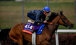 October 31, 2018 : Wild Illusion (GB), trained by Charlie Appleby, exercises in preparation for the Breeders' Cup Filly & Mare Turf at Churchill Downs on October 31, 2018 in Louisville, Kentucky. John Voorhees/Eclipse Sportswire/CSM