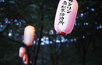 Pink lanterns sway on the spring breeze, at dusk amidst the cherry trees on Koboyama in Matsumoto, Japan